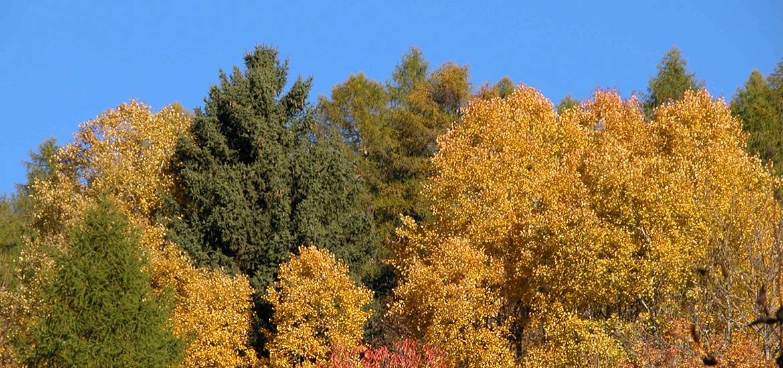autunno_2